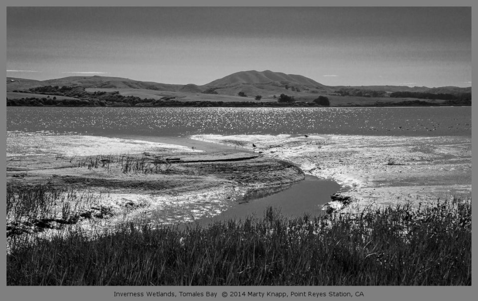 Inverness Wetlands, Tomales Bay