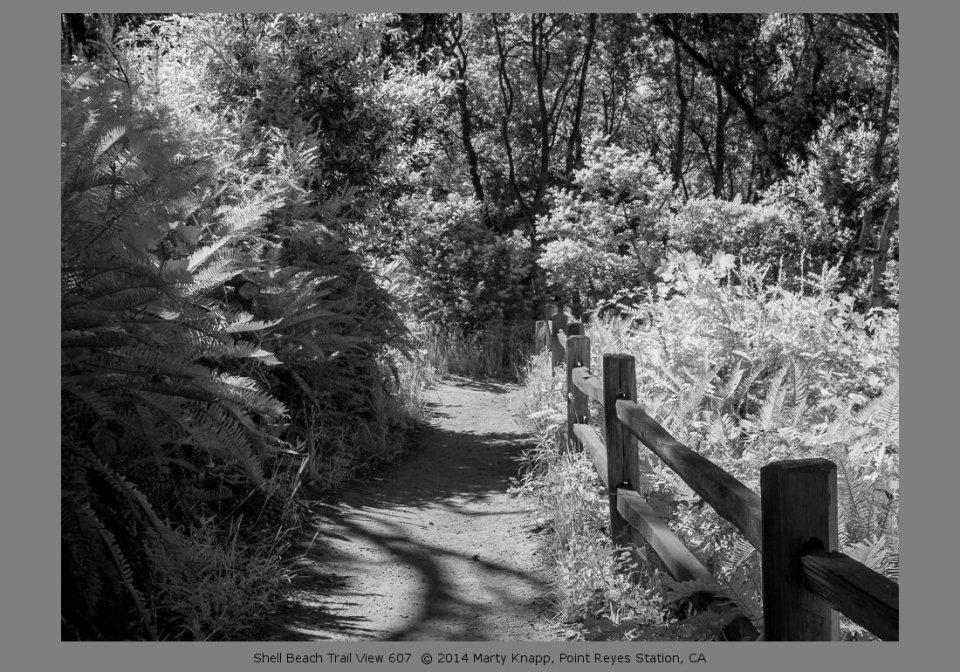 Shell Beach Trail View 607