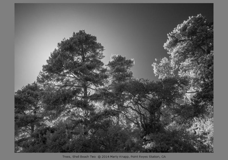 Trees, Shell Beach Two